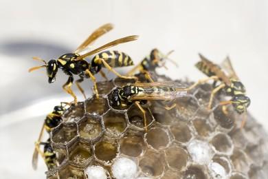 No More Wasps!