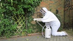 wasps nest removal bromley